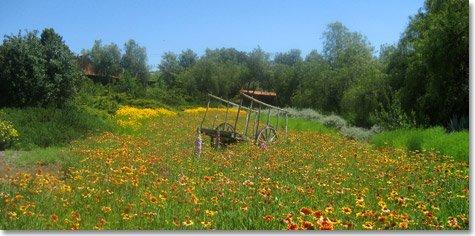 Field at Rancho La Puerta