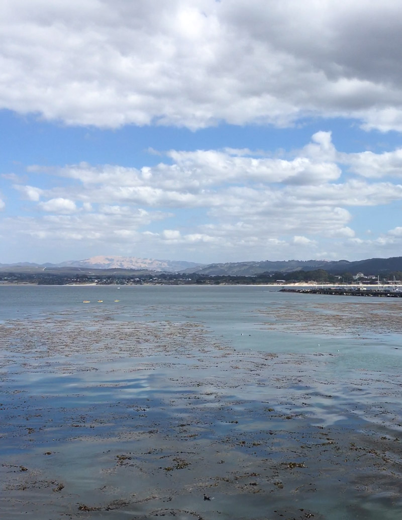 Monterey Bay / JillHough.com